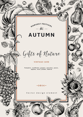 fruit: Autumn harvest. Vector vintage card. Frame with flowers, fruits, nuts and pumpkin. Black and White.
