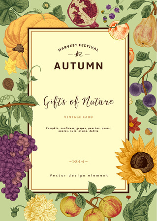 Autumn harvest. Vector vintage card. Frame with flowers, fruits, nuts and pumpkin.