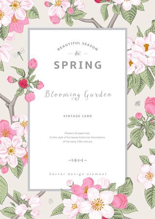 manzana: Vector Vintage primavera tarjeta vertical. Rama de flores de árbol de manzana rosa flores sobre fondo gris.