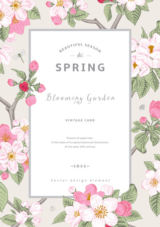 vintage postcard: Vintage vector vertical card spring. Branch of apple tree blossoms pink flowers on gray background.