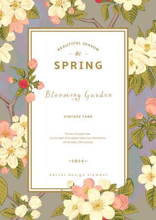 Vector Vintage tarjeta vertical de primavera. Rama floreciente de la manzana contra el cielo de la mañana. Foto de archivo - 35994130