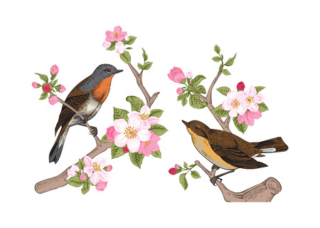 Vintage vector spring card. Birds on a branch of apple blossoms pink flowers.