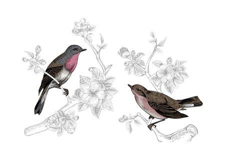 Vintage vector spring card. Birds on a branch of apple blossoms.