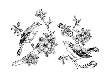 blossoms: Vintage vector spring card. Birds on a branch of apple blossoms. Monochrome. Illustration