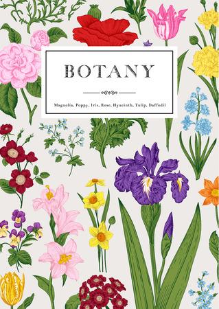 shabby: Botany. Vintage floral card. Vector illustration. Colorful flowers. Illustration
