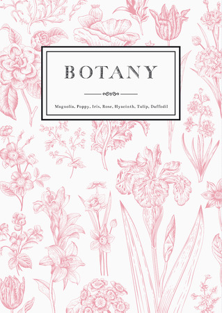 Botany. Vintage floral card. Vector illustration of style engravings. Pink flowers with black and white frame.