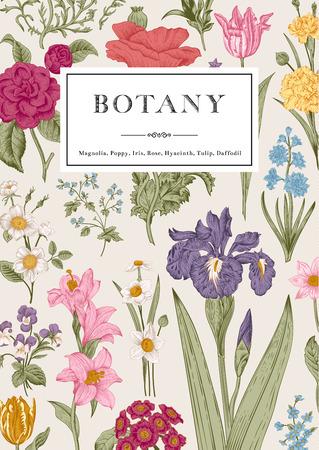 植物学。ビンテージ花カード。スタイルの彫刻のベクター イラストです。色とりどりの花。  イラスト・ベクター素材