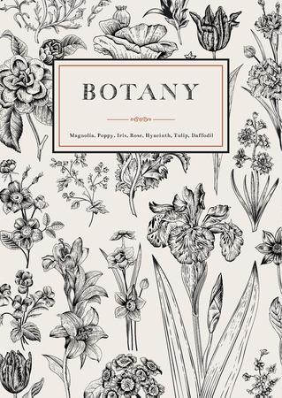 Botânica. Cartão floral do vintage. Vector a ilustração de gravuras de estilo. Flores preto e branco.