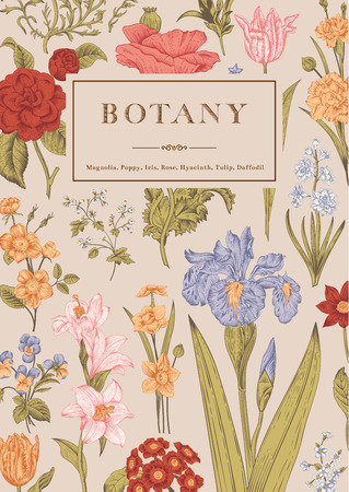 Botany. Vintage floral card. Vector illustration of style engravings. Colorful flowers. Ilustração