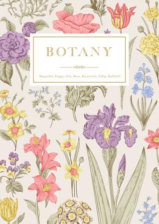 Plantkunde. Vintage floral kaart. Vector illustratie van stijl gravures. Pastel bloemen.