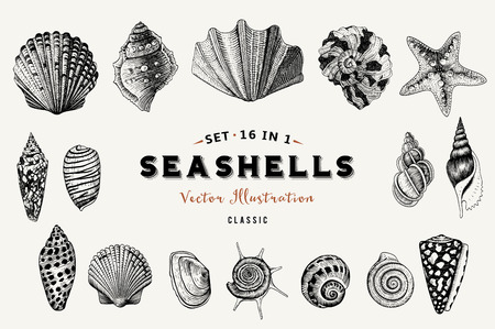 Set of vector vintage seashells. Nine black illustrations of shells on a beige background. Иллюстрация