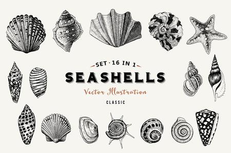 Set van vector vintage schelpen. Negen zwarte illustraties van schelpen op een beige achtergrond.
