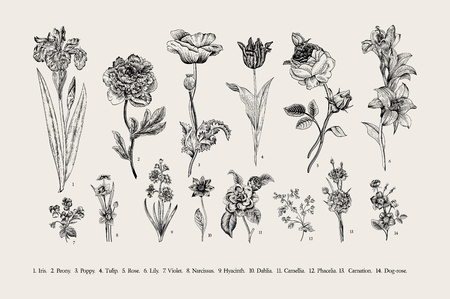Botânica. Conjunto. Flores do vintage. Ilustração preto e branco no estilo de gravuras.