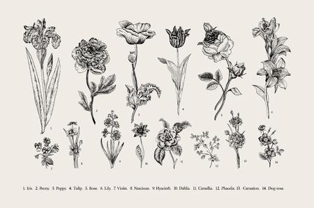 stile: Botanica. Impostato. Fiori dell'annata. Illustrazione in bianco e nero nello stile di incisioni.