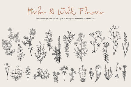 black: Herbs and Wild Flowers. Botany. Set. Vintage flowers. Black and white illustration in the style of engravings.