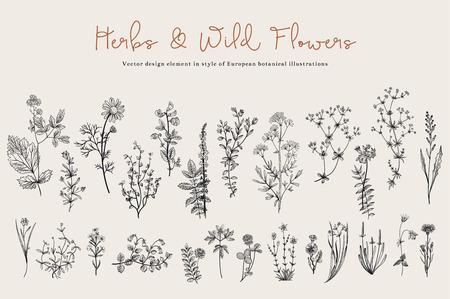 Hierbas y flores silvestres. Botánica. Conjunto. Flores de la vendimia. Ejemplo blanco y negro al estilo de los grabados.