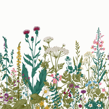 Vector seamless floral border. Herbs and wild flowers. Botanical Illustration engraving style. Colorful Ilustração