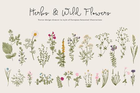 dibujo: Hierbas y flores silvestres. Botánica. Conjunto. Flores de la vendimia. Ilustración colorida en el estilo de los grabados. Vectores