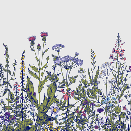 Vector seamless floral border. Herbs and wild flowers. Botanical Illustration engraving style. Colorful Ilustracja