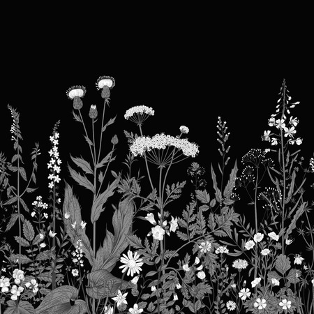 botanical illustration: Vector seamless floral border. Herbs and wild flowers. Botanical Illustration engraving style. Black and white