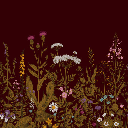 vinous: Vector seamless floral border. Herbs and wild flowers. Botanical Illustration engraving style. Vinous Illustration