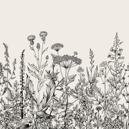 meadows: Vector seamless floral border. Herbs and wild flowers. Botanical Illustration engraving style. Black and white