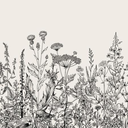 Vector senza soluzione di continuità bordo floreale. Erbe e fiori selvatici. Illustrazione botanica incisione stile. Bianco e nero