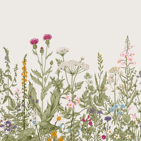 Vector seamless floral border. Herbs and wild flowers. Botanical Illustration engraving style. Colorful Vettoriali