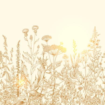 Vector seamless floral frontière. Herbes et fleurs sauvages. Illustration botanique Gravure style. Retro