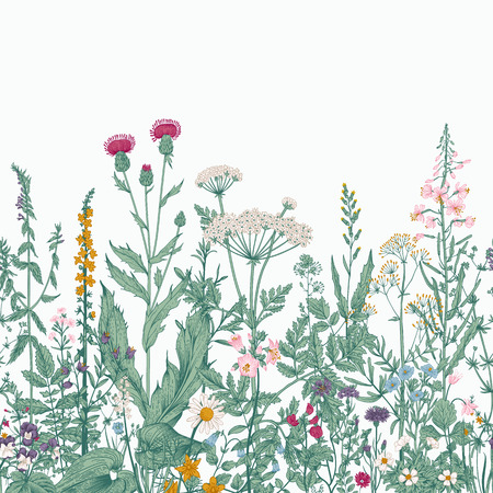 Vector seamless floral border. Herbs and wild flowers. Botanical Illustration engraving style. Colorful Çizim