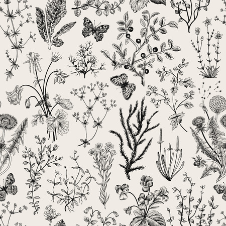 flowers field: Vector vintage seamless floral pattern. Herbs and wild flowers. Botanical Illustration engraving style. Black and white.