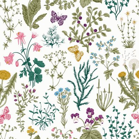 Wektor zabytkowe bez szwu kwiatowy wzór. Zioła i dzikie kwiaty. Ilustracje z roślinami grawerowanie stylu. Kolorowy