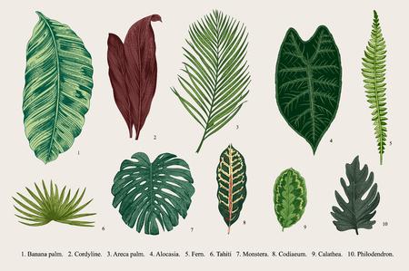 잎을 설정합니다. 외래종. 빈티지 식물입니다.