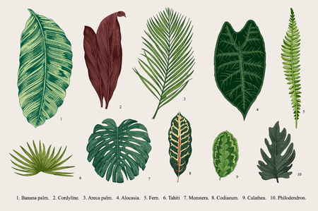 Set Leaf. Exotics. Vintage botanical illustration. Vettoriali