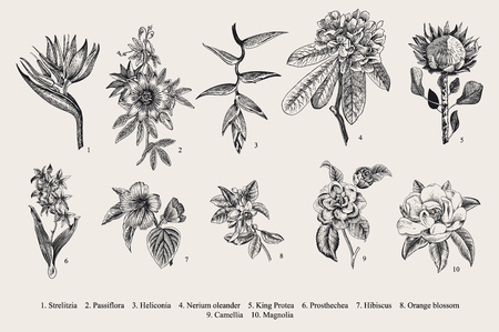 Exotic flowers set. Botanical vintage illustration. Çizim