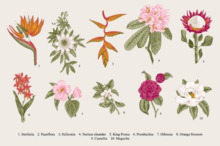 이국적인 꽃을 설정합니다. 식물 빈티지 그림.