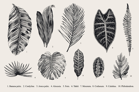 ビンテージの植物図