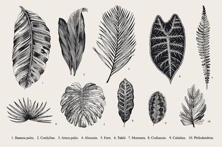 빈티지 식물 그림