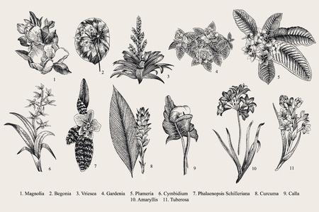 エキゾチックな花を設定します。植物のベクトル ビンテージ イラスト。デザイン要素です。黒と白 写真素材 - 64837564