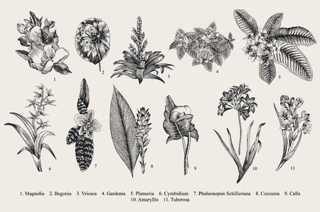 Exotische bloemen in te stellen. Botanische vector uitstekende illustratie. Design elementen. Zwart en wit Stock Illustratie