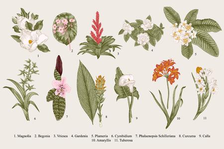 establecen las flores exóticas. vector de ilustración botánica de la vendimia. Elementos de diseño. Vistoso.