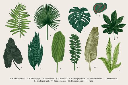 잎을 설정합니다. 외래종. 빈티지 벡터 식물입니다. 화려한. 일러스트