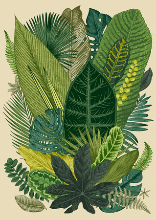 exotic fruit: Vector vintage composition. Exotic leaves. Botanical classic illustration.