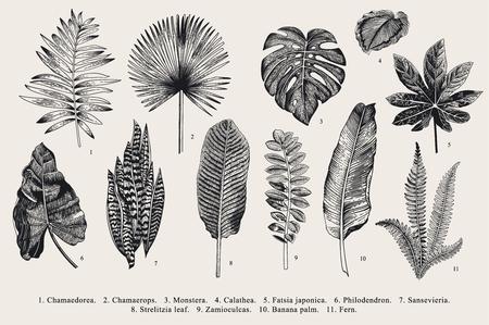 잎을 설정합니다. 외래종. 빈티지 벡터 식물입니다. 검정색과 흰색. 일러스트