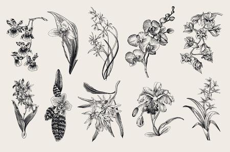 Exotic orchid set. Botanical vector vintage illustration. Design elements. Black and white Vettoriali