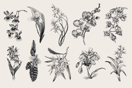 Exotic orchid set. Botanical vector vintage illustration. Design elements. Black and white Illustration