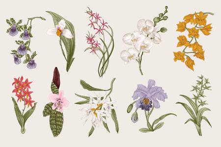 Exotic orchid set. Botanical vector vintage illustration. Design elements. Colorful.