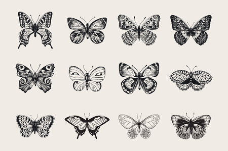Set of butterflies. Vector vintage classic illustration. Black and white Vettoriali