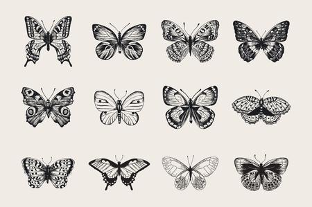 Set von Schmetterlingen. Vector Vintage klassische Illustration. Schwarz und weiß Vektorgrafik