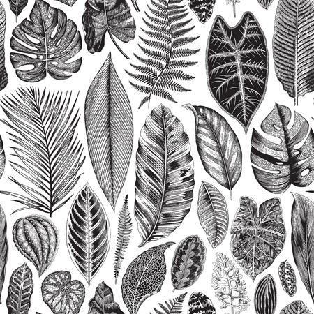 Vector seamless vintage floral pattern. Exotic leaves. Botanical classic illustration. Black and white Illustration